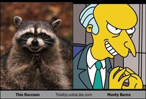 This Raccoon Totally Looks Like Monty Burns