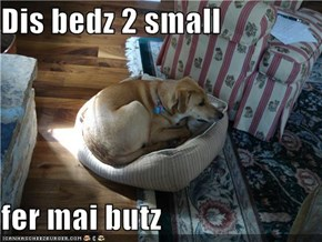 Dis bedz 2 small  fer mai butz