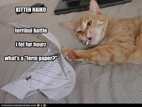 "KITTEH HAIKU   terribul battle  i fot fur hourz  what's a ""term paper?"""