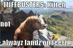 MIFFBUSTERS: Kitteh not alwayz landz on feetz