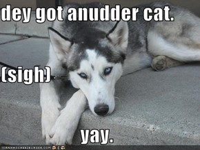 dey got anudder cat. (sigh) yay.