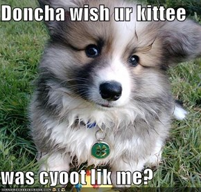 Doncha wish ur kittee   was cyoot lik me?