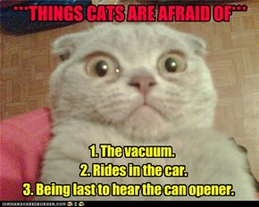 ***THINGS CATS ARE AFRAID OF***