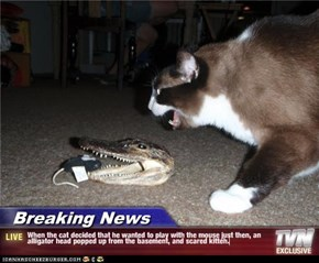 Breaking News - When the cat decided that he wanted to play with the mouse just then, an alligator head popped up from the basement, and scared kitteh.