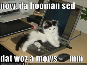 now, da hooman sed  dat woz a mows       mm