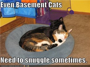 Even Basement Cats  Need to snuggle sometimes.