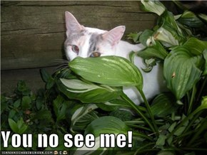 You no see me!