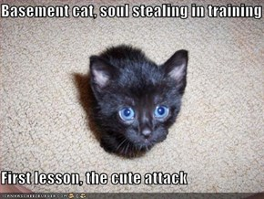 Basement cat, soul stealing in training  First lesson, the cute attack