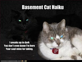 Basement Cat Haiku