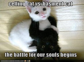 celling cat vs. basment cat   the battle for our souls begins