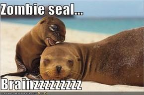 Zombie seal...  Brainzzzzzzzzz
