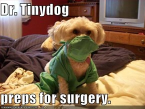 Dr. Tinydog  preps for surgery.