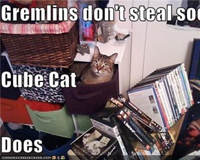 Gremlins don't steal socks  Cube Cat Does