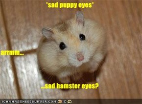 *sad puppy eyes* arrmm... ...sad hamster eyes?