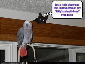 "Just a little closer and that Squawker won't say  ""Kitty's a stupid-head"" ever again."