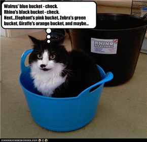 The infamous bucket thief.