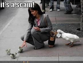 it's a scam!