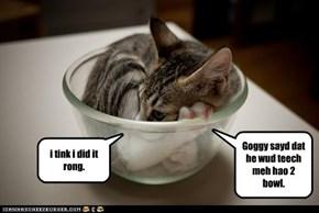 Goggy sayd dat he wud teech meh hao 2 bowl.