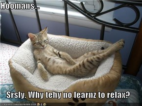 Hoomans...  Srsly. Why tehy no learnz to relax?