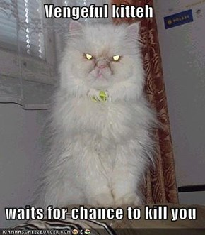 Vengeful kitteh    waits for chance to kill you