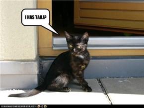 I HAS TAIL!?