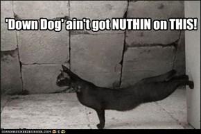 'Down Dog' Ain't Got Nuthin'