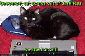 basement cat comes out of darkness  to steel ur wifi