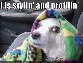 I is stylin' and profilin'