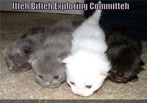Itteh Bitteh Exploring Committeh