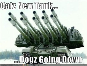 Catz New Tank...  ...Dogz Going Down