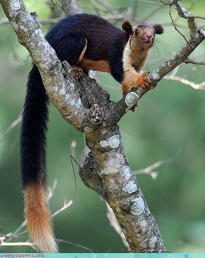Squirrel Lemur? Tree Weasel Chipmunk?