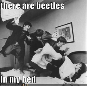 there are beetles   in my bed