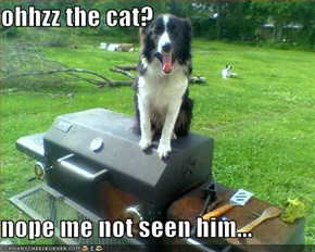 ohhzz the cat?  nope me not seen him...