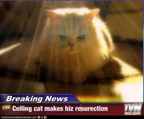Breaking News - Ceiling cat makes hiz resurection