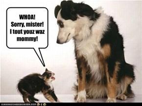 WHOA!  Sorry, mister!  I tout youz waz mommy!