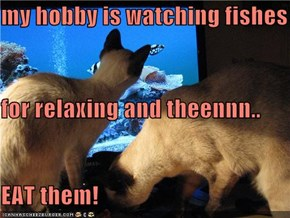 my hobby is watching fishes for relaxing and theennn.. EAT them!