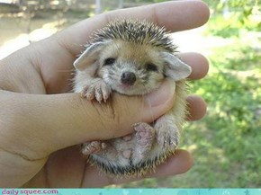 Cute Hedgehog!
