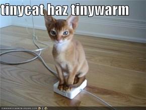 tinycat haz tinywarm