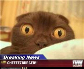 Breaking News - CHEEEEZBURGER!!