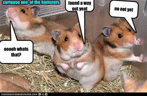 steavan whas always the  curiouse one  of the hamsters