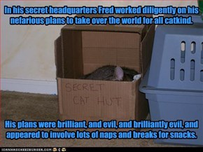 In his secret headquarters Fred worked diligently on his nefarious plans to take over the world for all catkind.           His plans were brilliant, and evil, and brilliantly evil, and appeared to involve lots of naps and breaks for snacks.