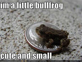 im a little bullfrog  cute and small
