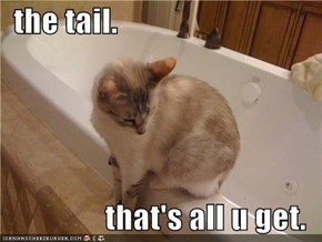 the tail.  that's all u get.