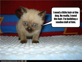 I need a little hair of the dog. No really, I need the hair. I'm building a voodoo doll of him.