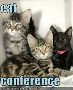 cat   conference