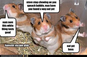 hamster escape plan