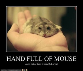 HAND FULL OF MOUSE