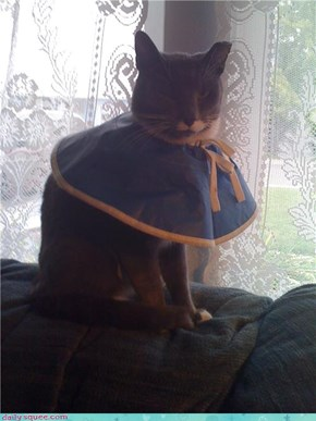 poor dress kitteh.....