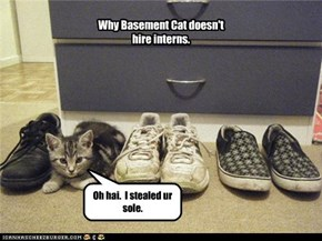 Why Basement Cat doesn't hire interns.