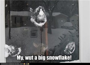 My, wut a big snowflake!